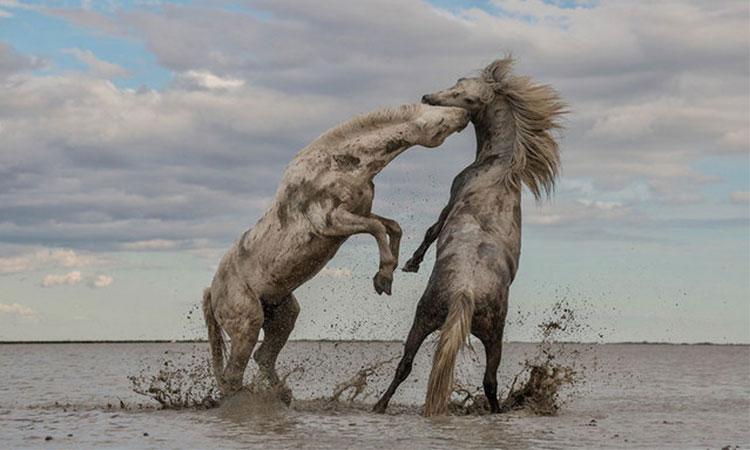 Imagini spectaculoase cu ultimii cai sălbatici din Europa. O adevărată comoară pe care România o deține.