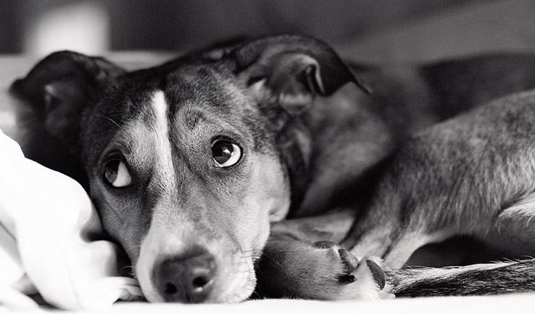 Cele mai frumoase lecții pe care le putem învăța de la un câine
