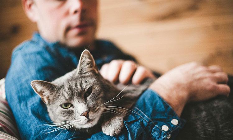 Iubești pisicile? Atunci află ca dragostea pentru pisici spune totul despre sănătatea ta psihologică.