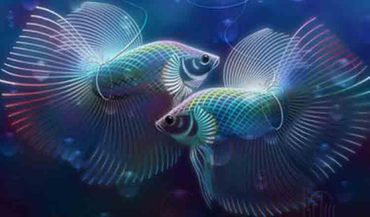 Horoscop 2019 zodia Pești!