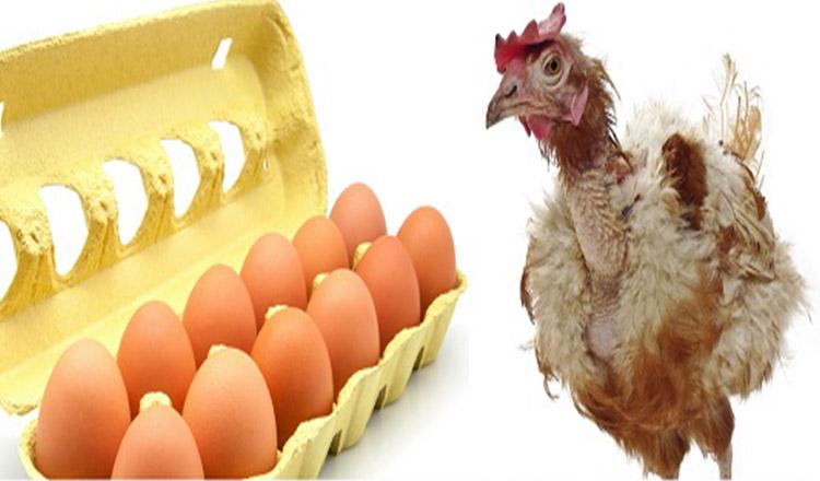 Ouăle îți pot spune dacă găina este bolnavă…