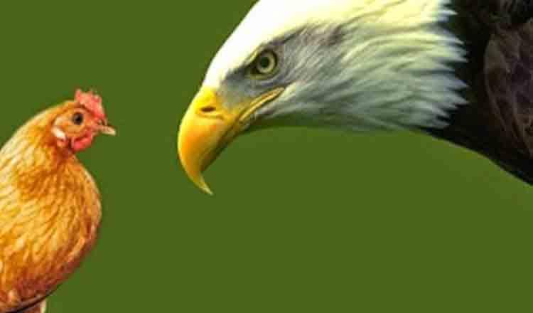 Dacă te naști găină, nu ai cum să ajungi vultur… O pildă impresionantă!