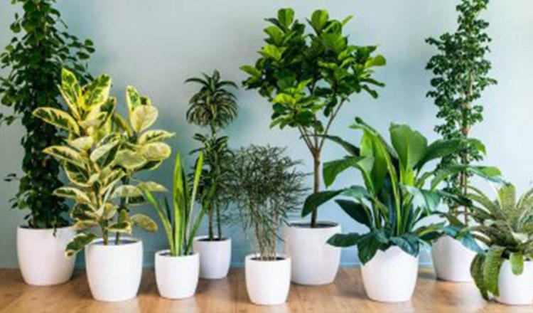Cele 5 plante aducătoare de fericire și noroc. Ține-le în casa ta!