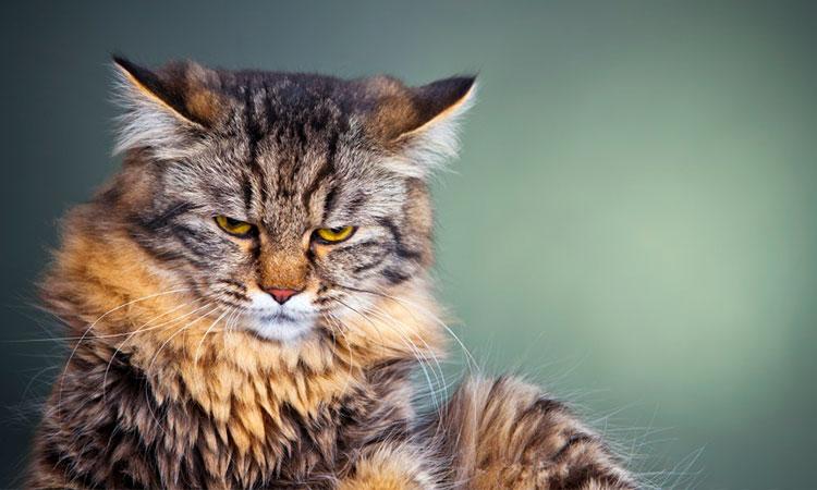 10 lecții pe care le poți învăța de la pisica ta!