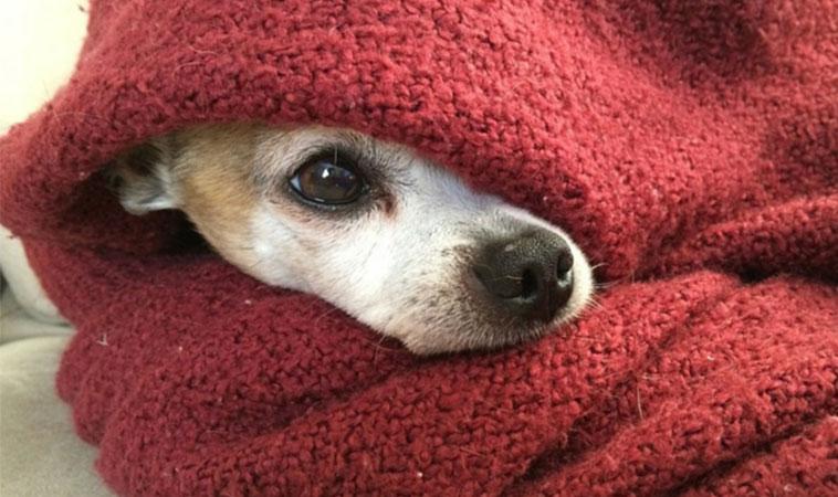 Noua lege o confirmă: acum poți fi închis pentru că îți lași câinele afară, în frig!