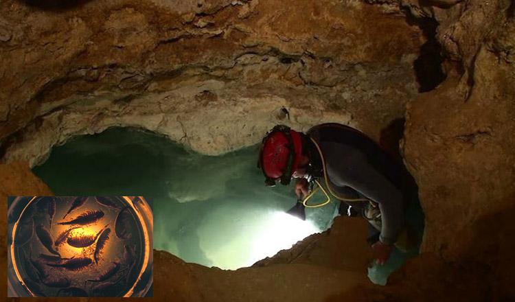 De ce este peștera Movile atât de specială?