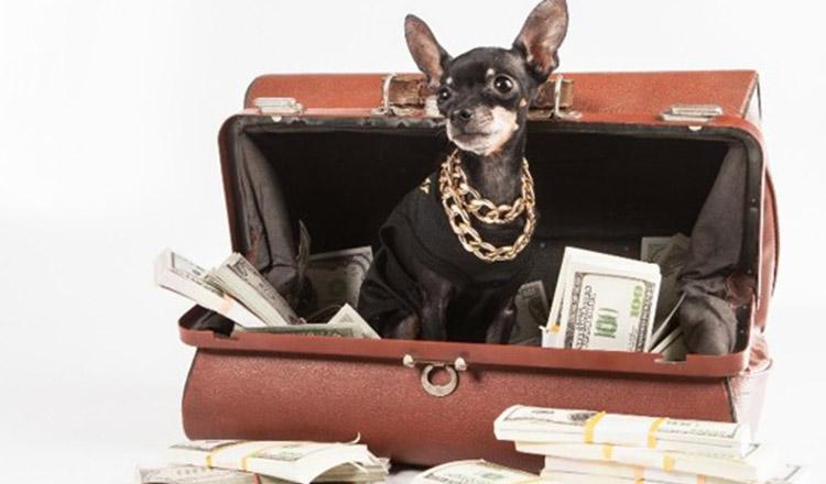 Cele mai bogate 10 animale din lume