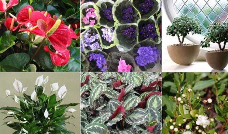 Ține minte! Aceste plante de interior vor aduce fericire și dragoste familiei tale