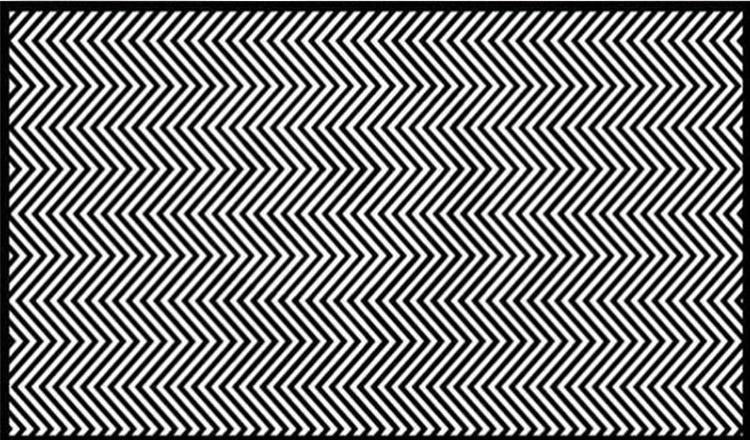 Doar 1% dintre oameni pot vedea animalul din imagine. Tu poți?