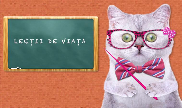 10 lecții de viață, pe care le poți învăța de la pisica ta