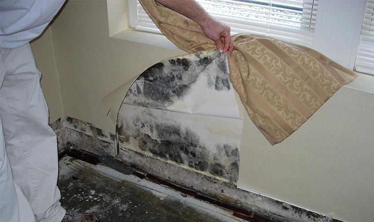 17 semnale alarmante că mucegaiul din casă îți afectează organismul