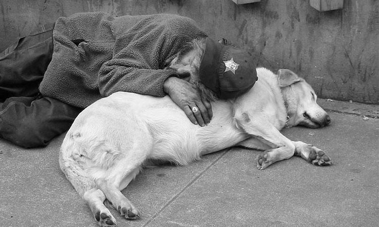 Cercetătorii demonstrează că animalele de companie, mai precis câinii, ne înțeleg mai bine decât o fac oamenii