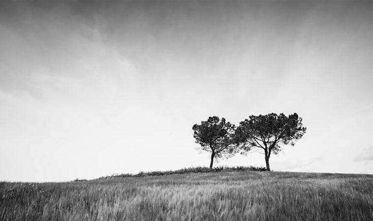 Pilda celor doi pomi… O citești imediat și o ții minte toată viața