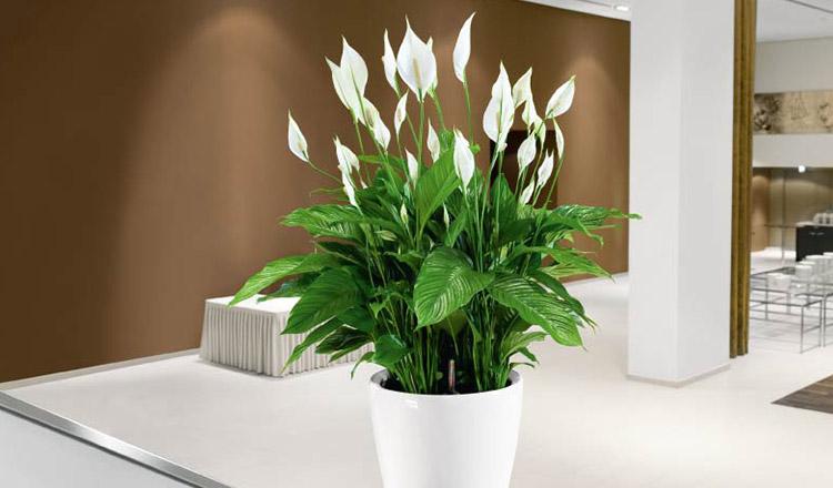 Plante care aduc fericirea și armonia în casă