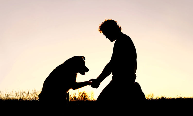 Acesta este motivul pentru care pierderea unui animal te rănește aproape la fel de tare ca în cazul pierderii unei persoane dragi