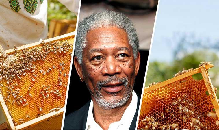 Actorul Morgan Freeman şi-a transformat ferma, de 124 de hectare, într-un sanctuar dedicat albinelor