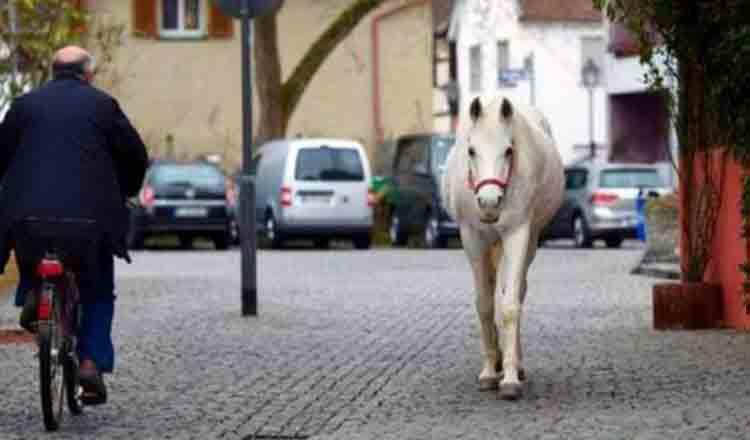 """De 14 ani, un cal alb iese zilnic pe străzile unui oraş german: """"Sunt Jenny, nu am fugit, doar mă plimb"""""""