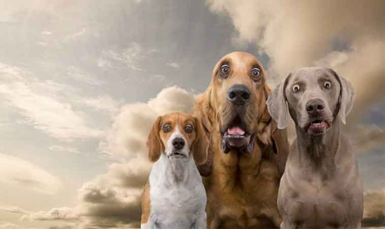 Cercetătorii sunt de părere că uneori, câinii ne înțeleg mai bine decât oamenii