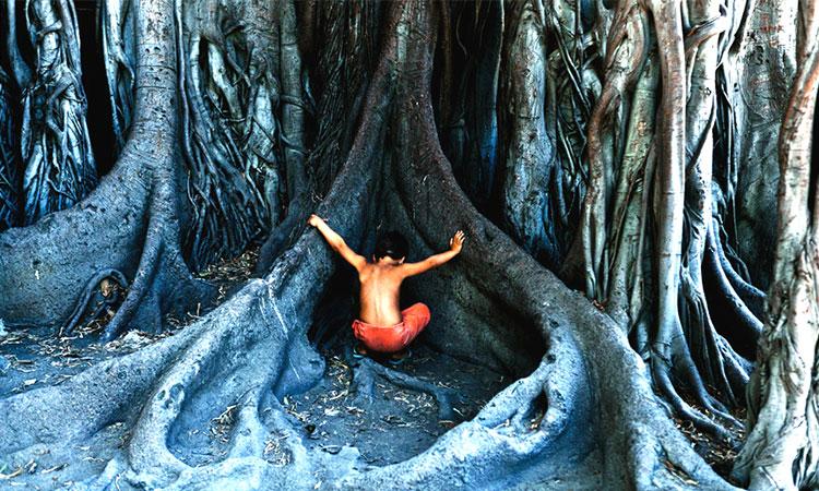 Energia magnifică a copacilor sau cum ne vindecă pomii