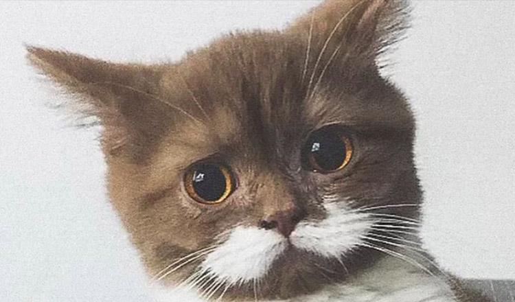 Faceți cunoștință cu Gringo, pisicuța cu mustață, care a cucerit inimile tuturor