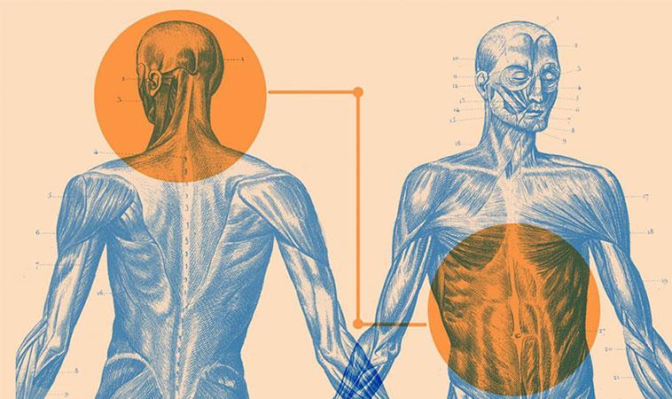 Știai că organismul tău are două creiere?